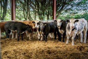 Cattle feed using your own crops for complete traceability